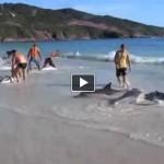 Giải cứu cá heo ở vùng biển Brazil