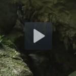 Video khám phá vườn quốc gia Phong Nha-Kẻ Bàng