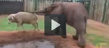 23 tình bạn vượt chủng loài của động vật
