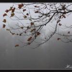 Rét đậm duy trì trên miền Bắc, miền Nam sương mù dày đặc