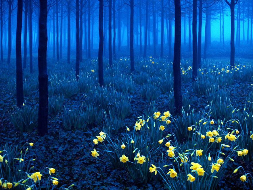 Black Forest, Đức