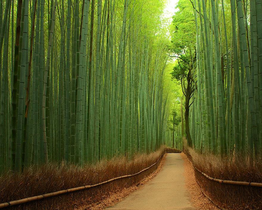 Rừng tre, Nhật Bản