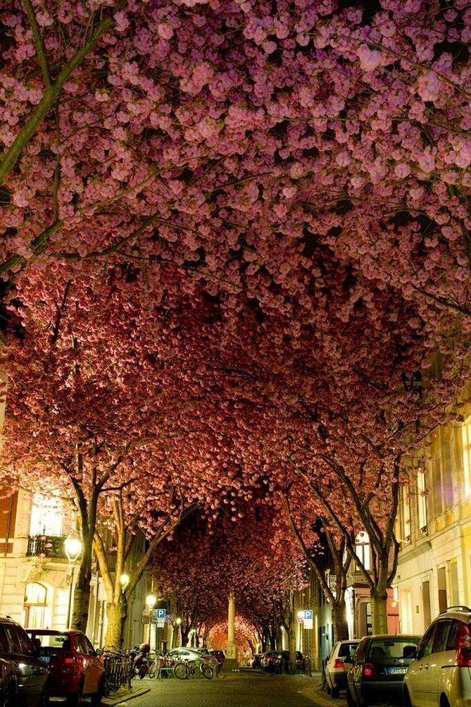 Con đường của thành phố Bonn, Đức