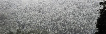 Mưa tuyết phủ trắng Sapa