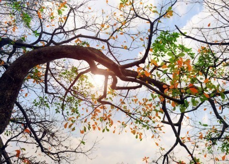 Cuối tuần nắng đẹp, Bắc Bộ đón gió mùa Đông Bắc từ đêm ngày 2/11