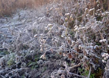 Tuyết có thể rơi ở Sapa đêm nay, Bắc Bộ cuối tuần mưa rét