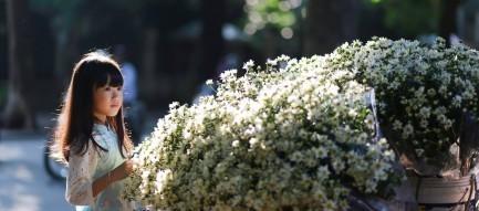 Không khí lạnh suy yếu, Bắc Bộ cuối tuần hửng nắng